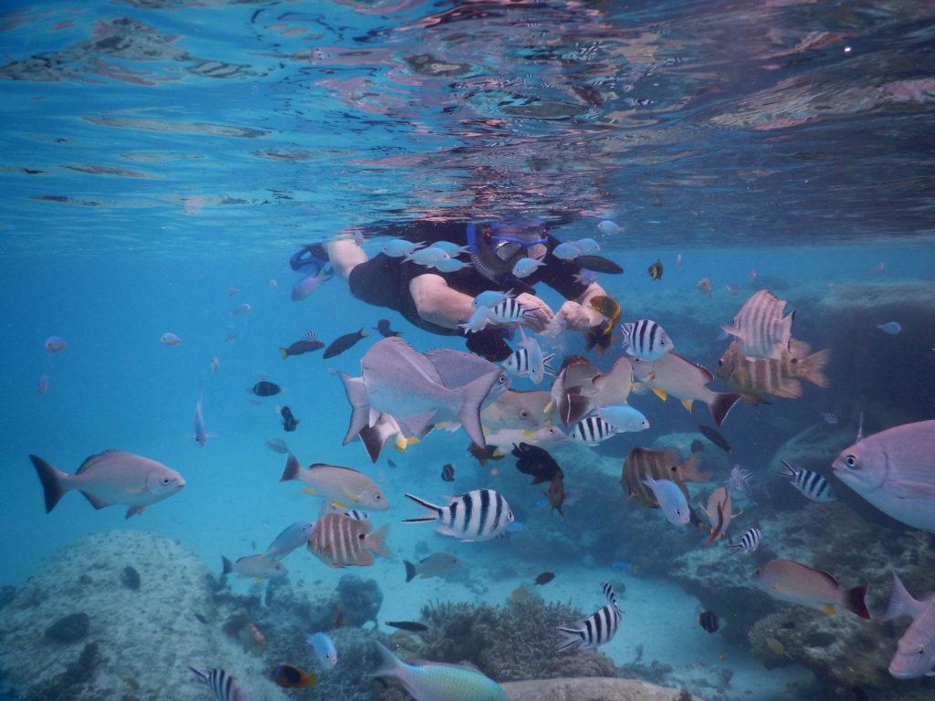 Plongée en apnée dans le lagon : poissons multicolores et coraux